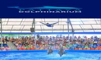 Pattaya Dolphinarium (Ticket Only) Code S-91
